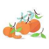 Mandarine und Blume auf weißem Feld Lizenzfreie Stockbilder