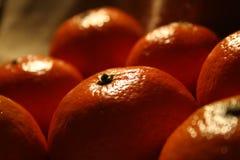 Mandarinefrüchte Lizenzfreie Stockfotografie