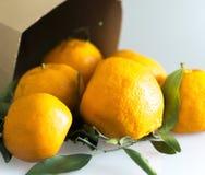 Mandarinen-Blatt-Papiertüte-Detail Stockfoto