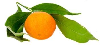 Mandarinen (citrus reticulata), också som är bekant som mandarinen eller mandarinen, isolerad vit bakgrund Arkivfoto