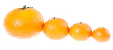 Mandarinen durch Höhe in einer Zeile Lizenzfreies Stockfoto