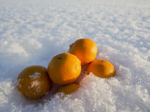 Mandarinen im Schnee Stockfotos