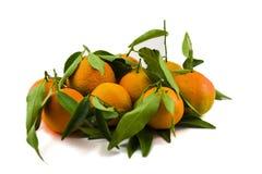 Mandarinen mit Blättern Stockbilder