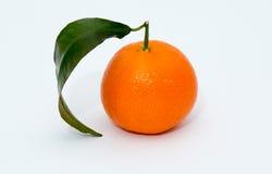 Mandarinenzitrusfrucht auf weißem Hintergrund Lizenzfreie Stockfotos