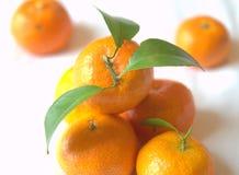 Mandariner Fotografering för Bildbyråer