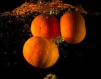 Mandariner i vattnet Arkivfoto