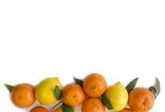 Mandariner och citroner Arkivfoto