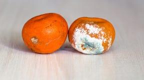 Mandariner som är bortskämda och som är värre med formen arkivbilder