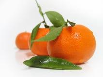 Mandarines Royalty Free Stock Image