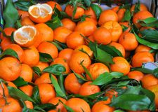 Organic mandarines at the fruit market  Royalty Free Stock Photo