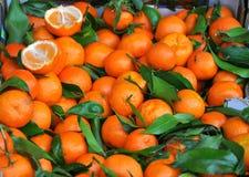 mandarines Royaltyfri Foto