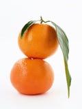 Mandarines Foto de archivo libre de regalías