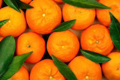 Mandarines Photo libre de droits