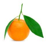 mandarines Photos libres de droits