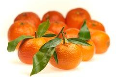 Mandarines appétissantes avec les feuilles vertes sur un fond blanc dans le studio image stock