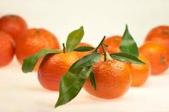 Mandarines appétissantes avec les feuilles vertes sur un fond blanc dans le studio photo stock
