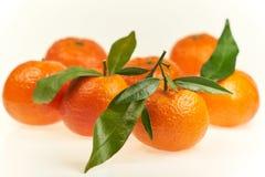 Mandarines appétissantes avec les feuilles vertes sur un fond blanc dans le studio images stock