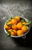 Mandarines avec des feuilles dans une casserole Sur le fond en pierre Photographie stock libre de droits
