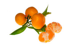 Mandarines avec des feuilles en gros plan Image libre de droits