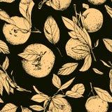 Mandarines avec des feuilles, modèle foncé sans couture Photo libre de droits
