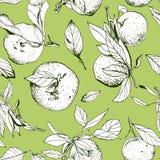 Mandarines avec des feuilles, modèle vert sans couture Photos libres de droits