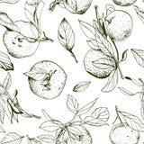 Mandarines avec des feuilles, monochrome sans couture Image libre de droits