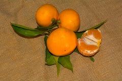 Mandarines avec des lames Photo stock