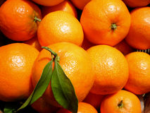 Mandarines Background. Close up view of a mandarines background stock photography