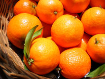 Mandarines in a basket. Close up view of some mandarines in a basket royalty free stock image