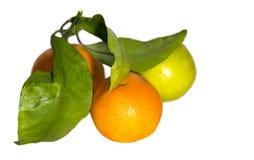 Mandarines, citron Images libres de droits