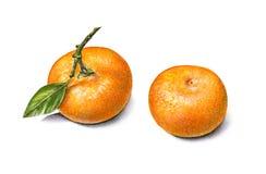 Mandarines d'aquarelle d'olor de ¡ de Ð Travail manuel Fruit tropical Nourriture saine Image stock