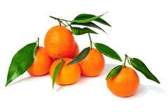 Mandarines d'isolement au-dessus du blanc Images stock