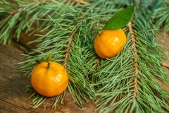 Mandarines dans le temps de Noël images libres de droits