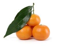 mandarines de segment de mémoire petites Image libre de droits