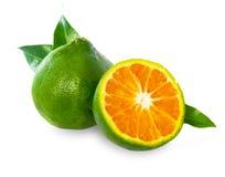 Mandarines douces vertes Image libre de droits
