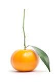 Mandarines en el fondo blanco Foto de archivo
