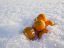 Mandarines en nieve Imágenes de archivo libres de regalías