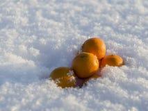 Mandarines en nieve Foto de archivo libre de regalías
