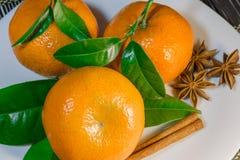 Mandarines en una placa Fotos de archivo libres de regalías