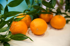 Mandarines fraîches Photo libre de droits
