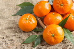 Mandarines fraîches d'agrumes, plan rapproché d'oranges dans le style rustique Photos libres de droits