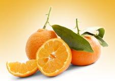 Mandarines isolated Stock Photography