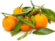 Mandarines mûres images libres de droits