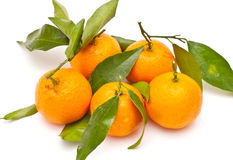 Mandarines mûres photographie stock libre de droits