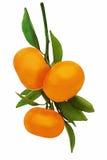 Mandarines mûres fraîches avec les feuilles vertes d'isolement sur le backgr blanc Images libres de droits