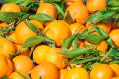 ¡Mandarines mandarín, mandarinas! Fruta cítrica muy dulce y sabrosa Fotos de archivo