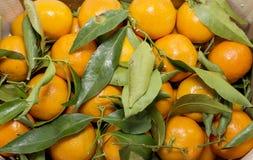 Mandarines Stock Photos