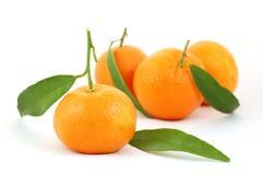 Mandarines op geïsoleerd royalty-vrije stock afbeeldingen