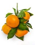 Mandarines sur la table Images libres de droits