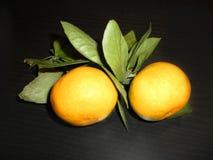 Mandarines sur un branchement avec des lames Photos stock